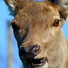 Oh Deer...I Think I May Have Broken A Tooth! - Deer - NZ by AndreaEL