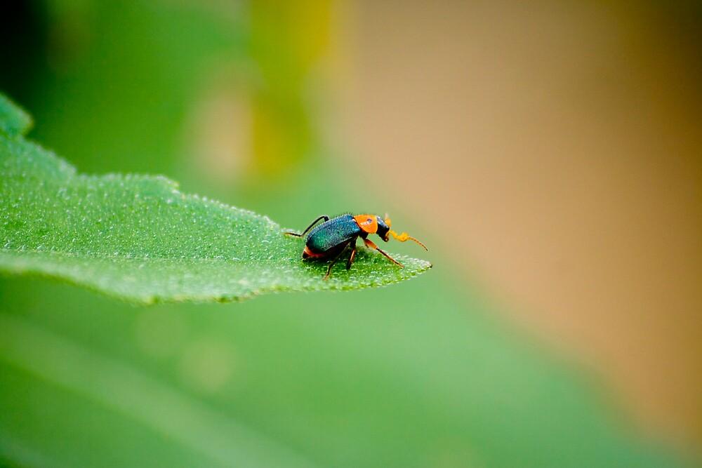 Little Bug on a Leaf by jstew