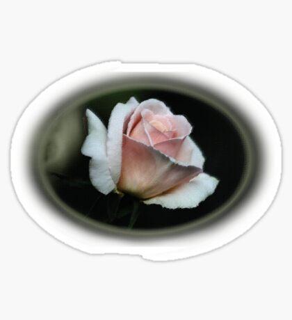 rosa tee Sticker