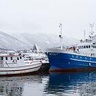 Boats in Tromso by Dominika Aniola