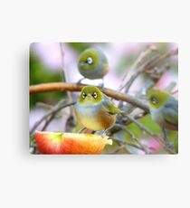 AND SO!!.. Where Is The Better Half?  - Silver-Eye - NZ Metal Print