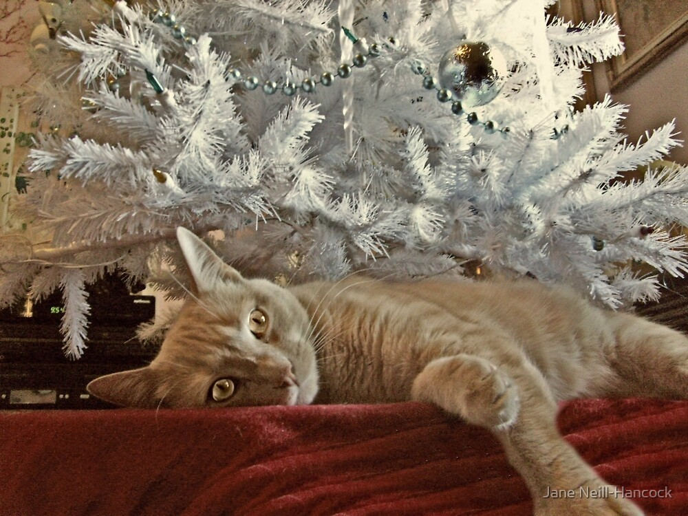 Tired of Waiting For Santa by Jane Neill-Hancock