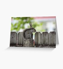 Posted Squirrel Greeting Card