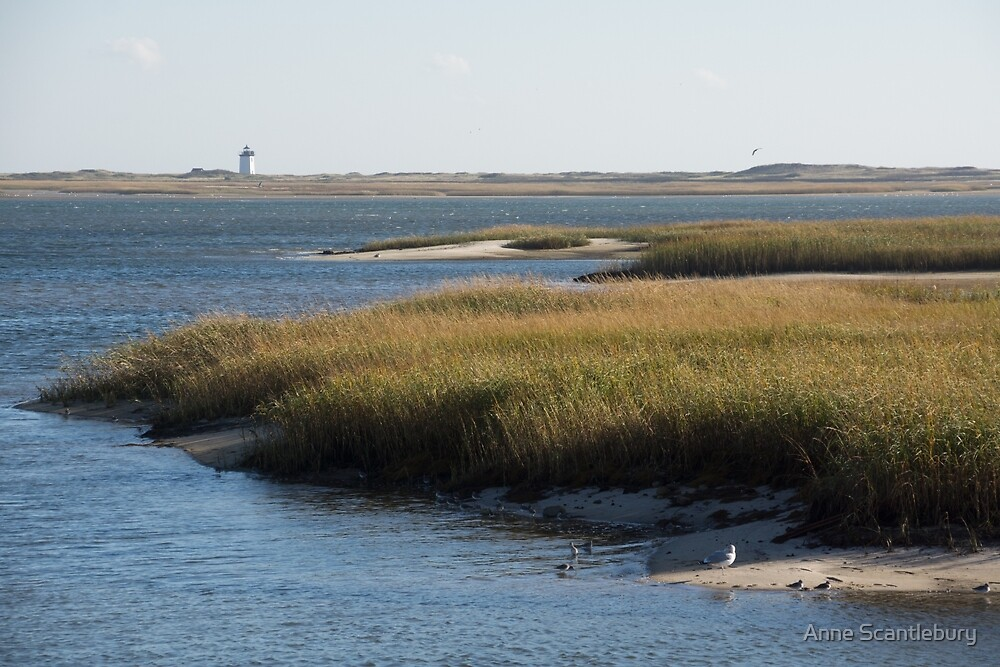 marshes by Anne Scantlebury