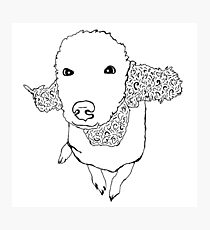 cute dog Photographic Print