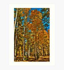 Golden Aspens Art Print