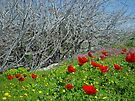 Spring is coming soon by Moshe Cohen