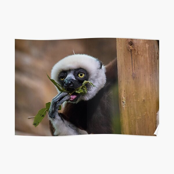 Zoboomafoo on Lunch Break Poster