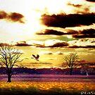 Volando Bajo by Daniela M. Casalla