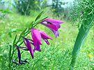 Purple Flowers closeup by Moshe Cohen