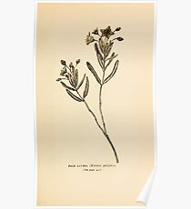 Harper's Guide to Wild Flowers 1912 Creevey, Caroline and Stickney, Alathea 144 Pale Laurel Poster