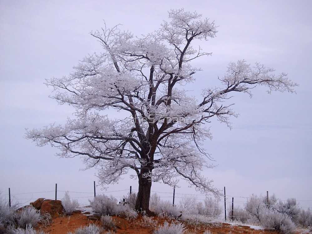 Snow Dusted Tree by the57man