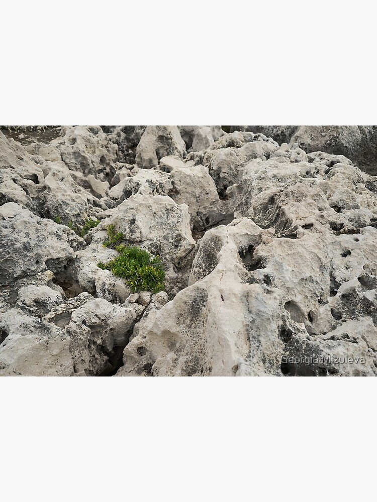 Life on Bare Rock - Weathered Limestone and Little Green Survivors by GeorgiaM