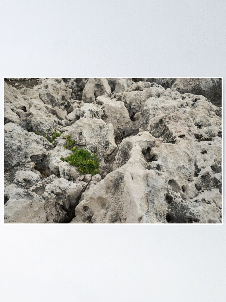 Alternate view of Life on Bare Rock - Weathered Limestone and Little Green Survivors Poster