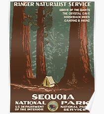 Mammutbaum-Nationalpark-Weinlese-Reise-Plakat Poster