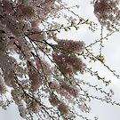 Just Lift Your Head and Enjoy Spring by Georgia Mizuleva