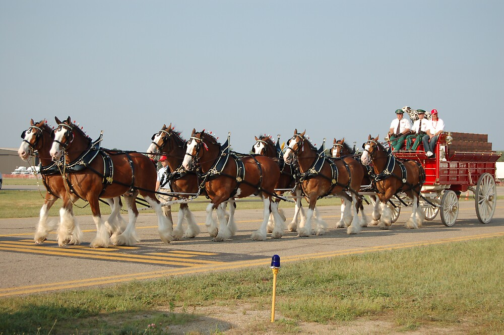 Budweiser Clydesdales by Eric Dush