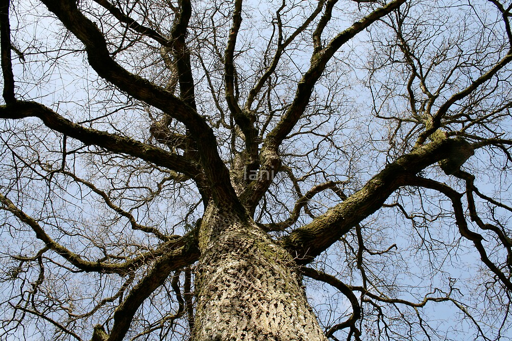 looking up a tree by Iani