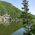 Lean In - a Lone Pine on the Lake Shore by Georgia Mizuleva