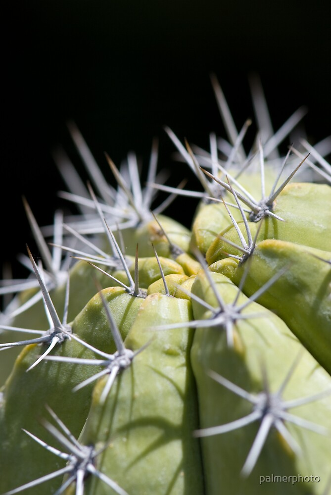 Cactus by palmerphoto
