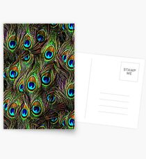 Peacock Feathers Invasion Postcards