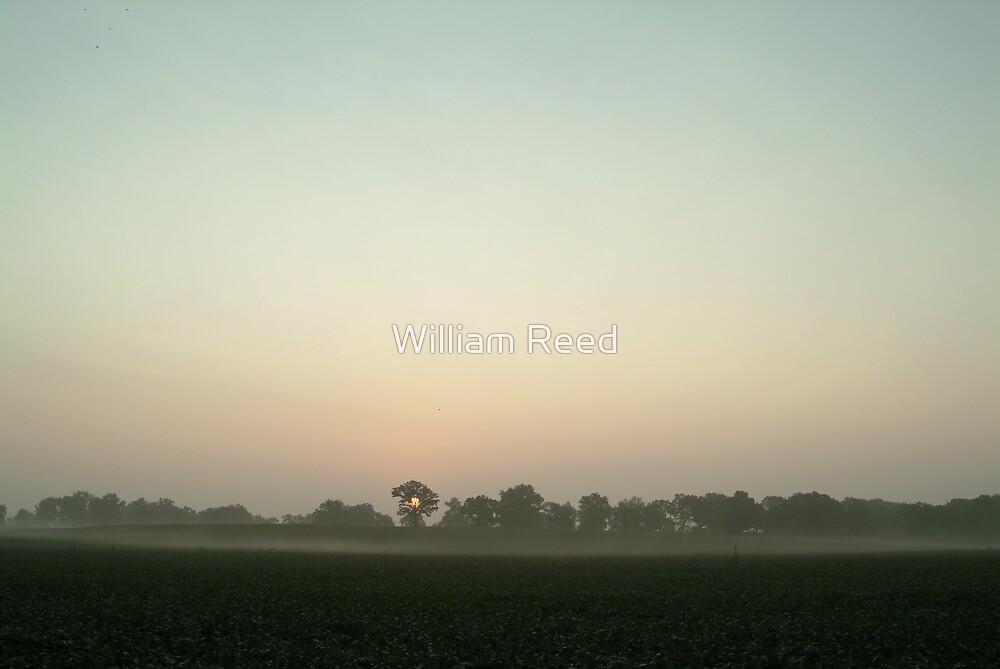 Foggy Sunrise 1 by William Reed