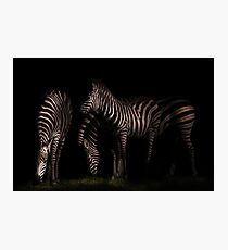 Zebras at Night Photographic Print