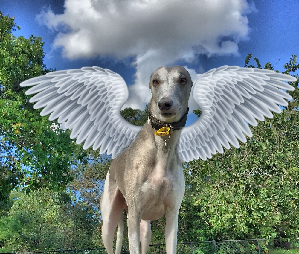 The Winged Whippet by PaulWebster