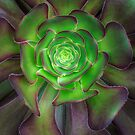 Euphoria of the Euphorbia by alan shapiro