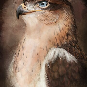 Ferruginous Hawk by SessaV