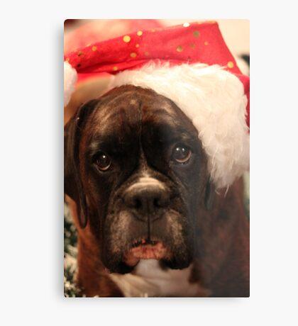 Die Grüße der Jahreszeit - Boxer Dogs Series Metalldruck