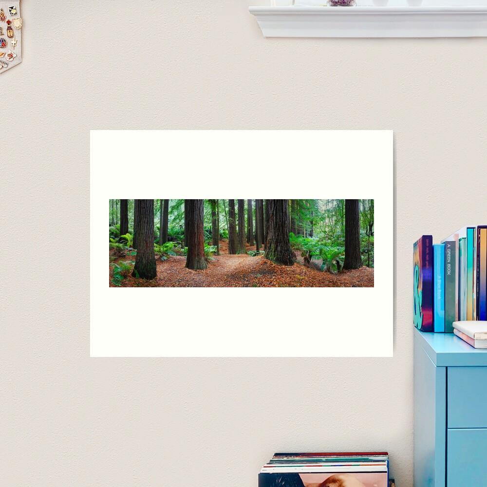 Redwood Forest, Otways, Great Ocean Road, Victoria, Australia Art Print