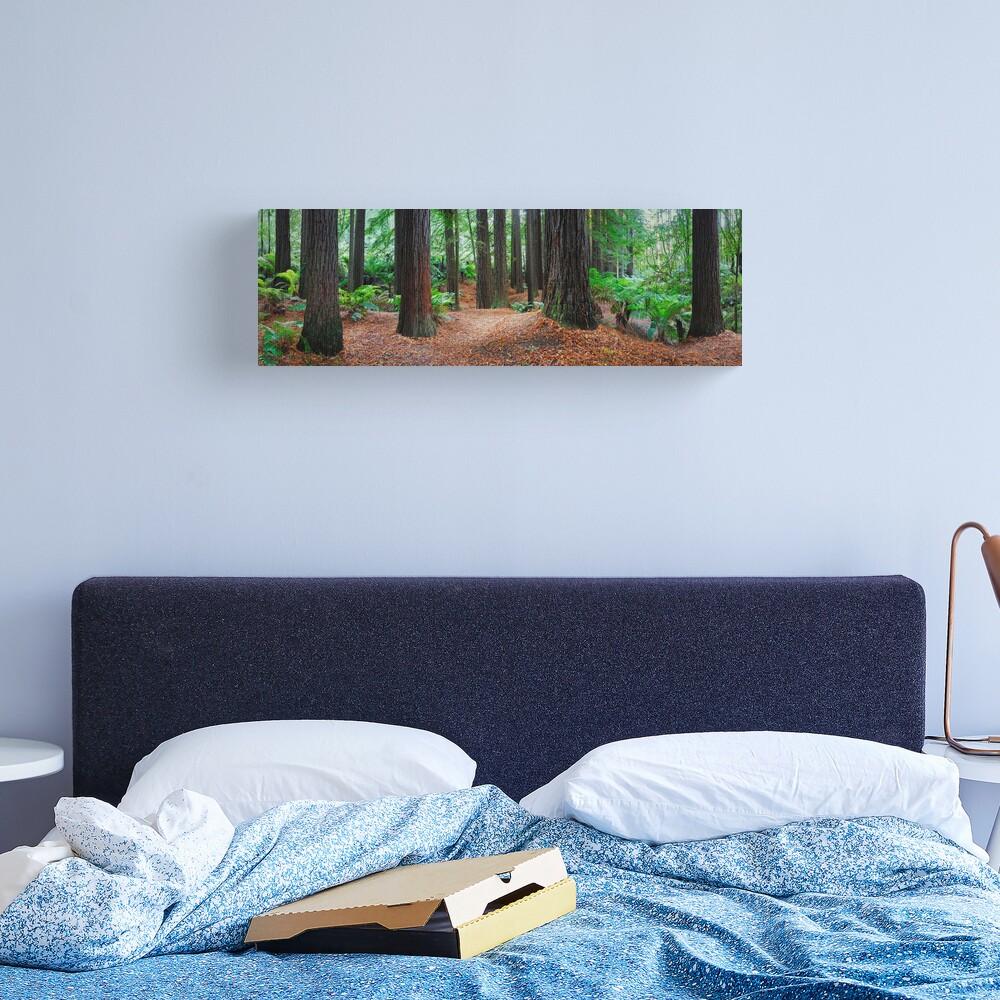 Redwood Forest, Otways, Great Ocean Road, Victoria, Australia Canvas Print