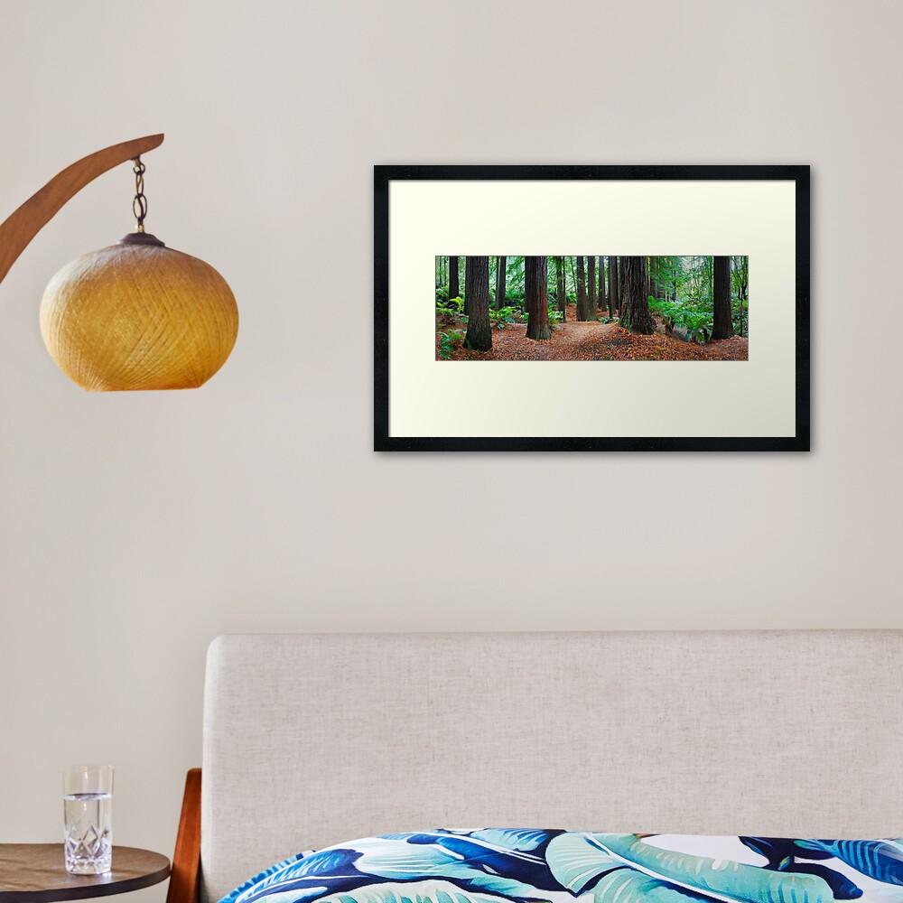 Redwood Forest, Otways, Great Ocean Road, Victoria, Australia Framed Art Print