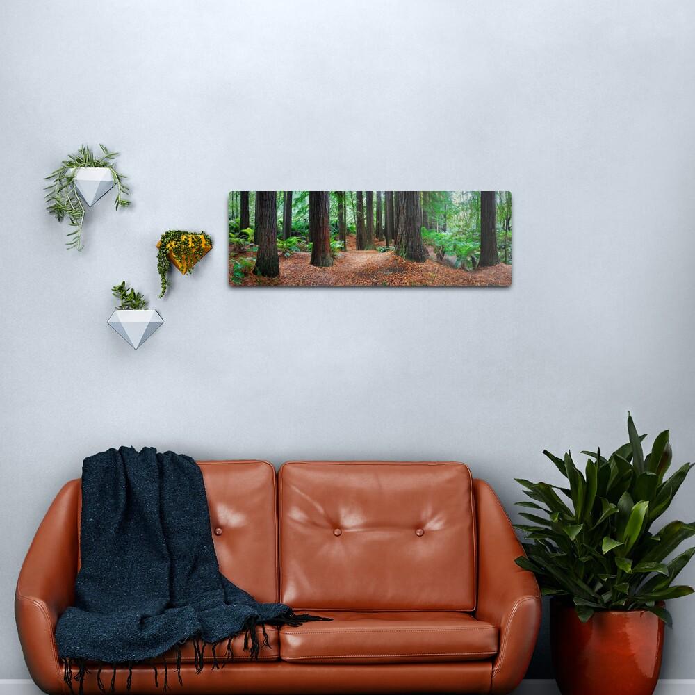 Redwood Forest, Otways, Great Ocean Road, Victoria, Australia Metal Print
