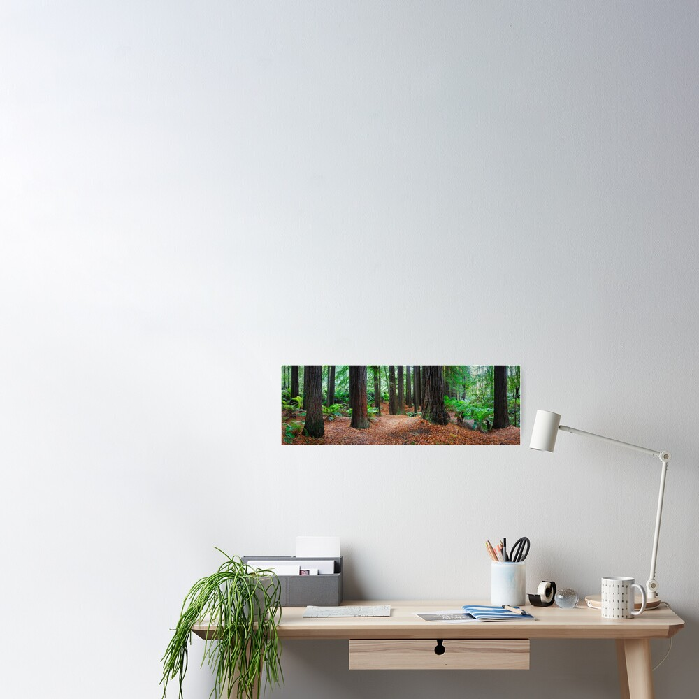 Redwood Forest, Otways, Great Ocean Road, Victoria, Australia Poster
