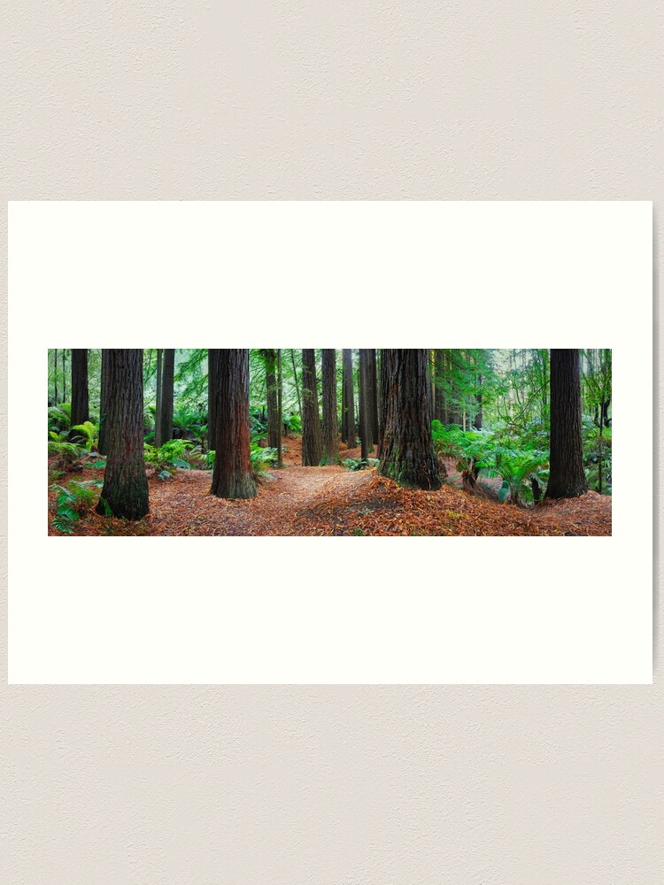 Alternate view of Redwood Forest, Otways, Great Ocean Road, Victoria, Australia Art Print