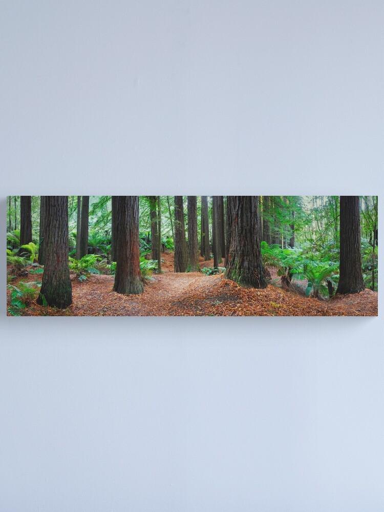 Alternate view of Redwood Forest, Otways, Great Ocean Road, Victoria, Australia Canvas Print