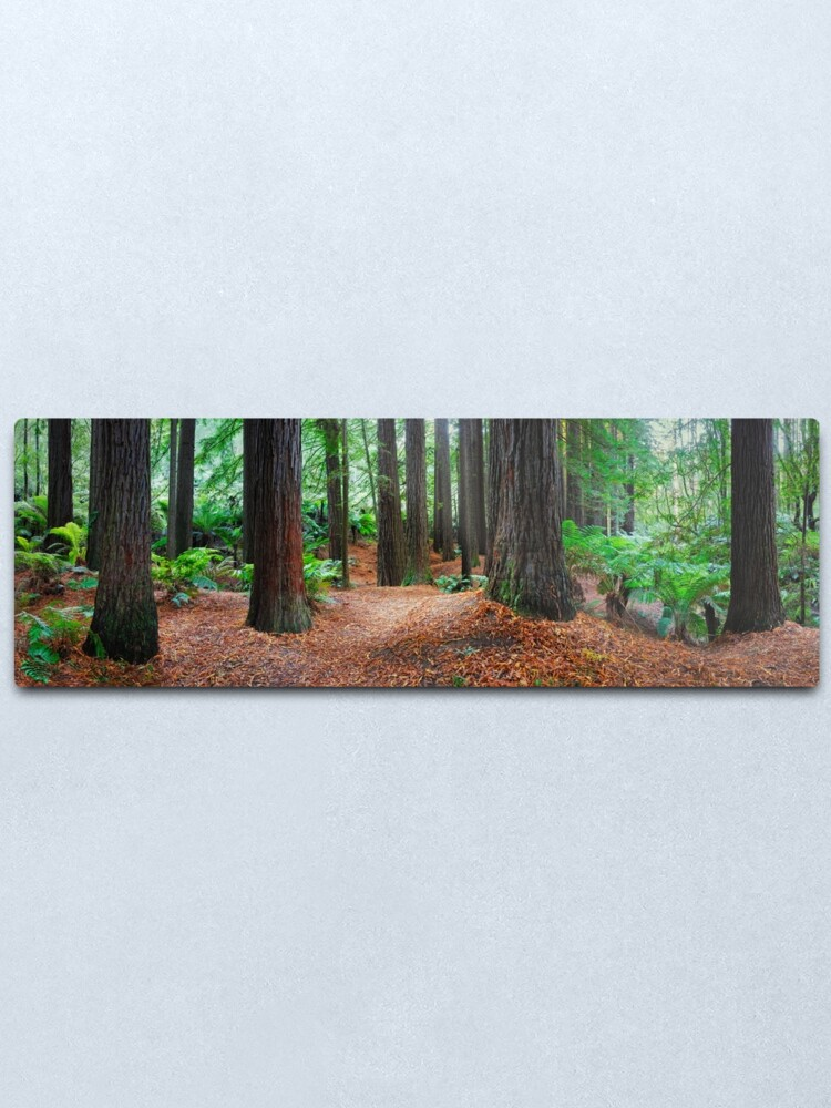 Alternate view of Redwood Forest, Otways, Great Ocean Road, Victoria, Australia Metal Print