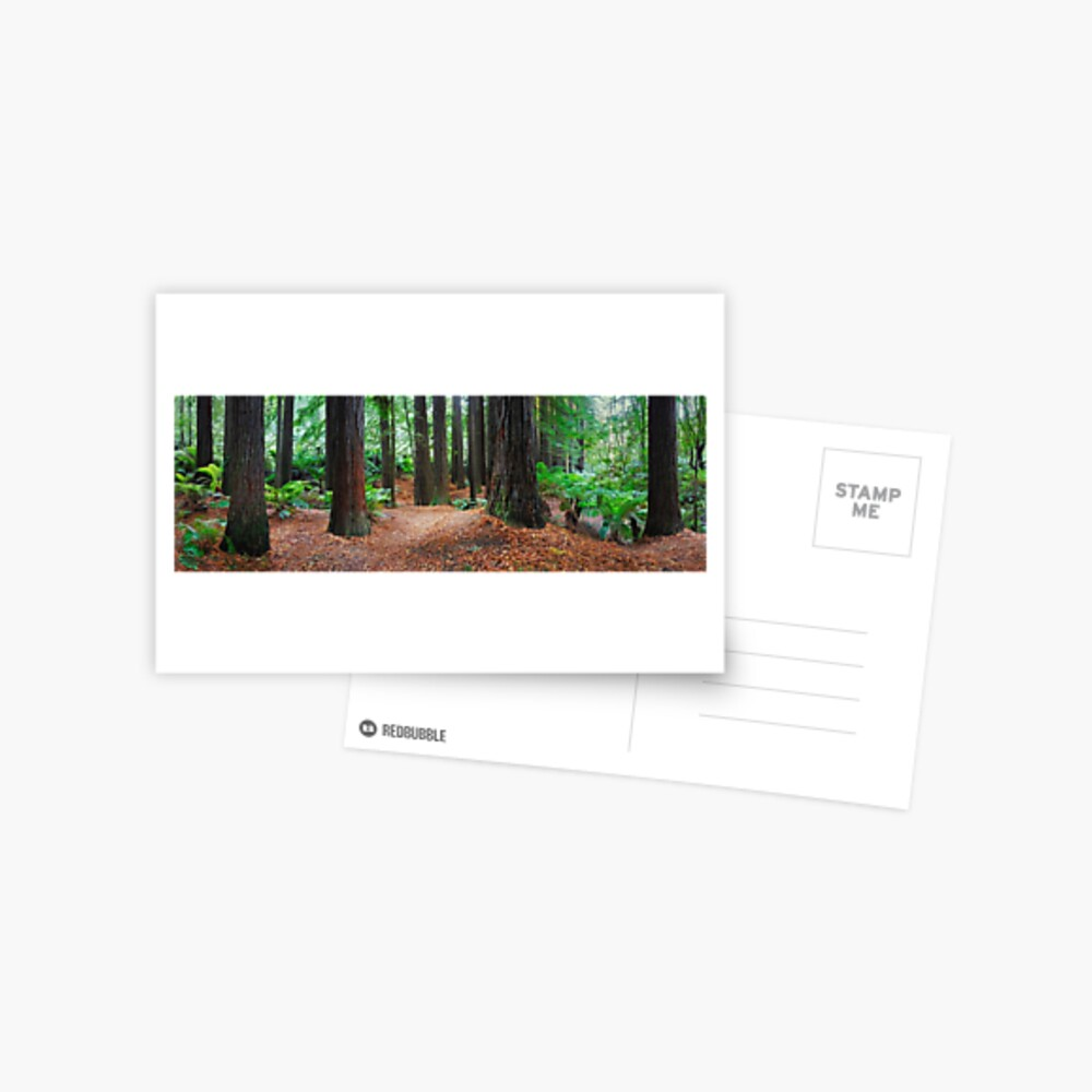 Redwood Forest, Otways, Great Ocean Road, Victoria, Australia Postcard