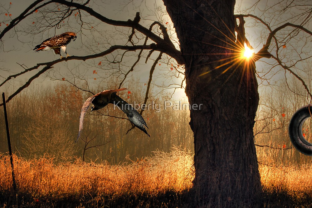 Oak and Hawks by Kimberly Palmer
