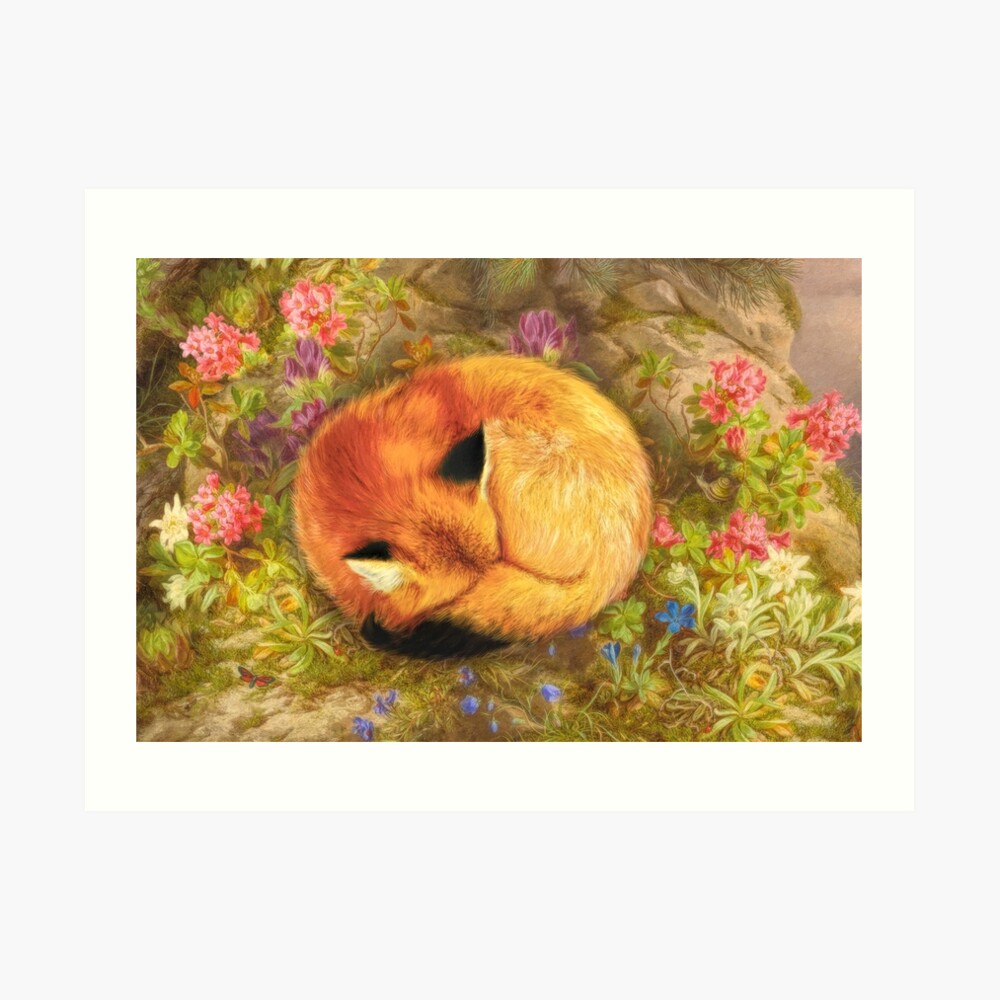 The Cozy Fox Art Print