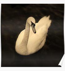 Windermere Swan Poster