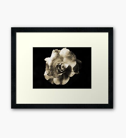 Rain Drops On A Rose -Sepia- Framed Print