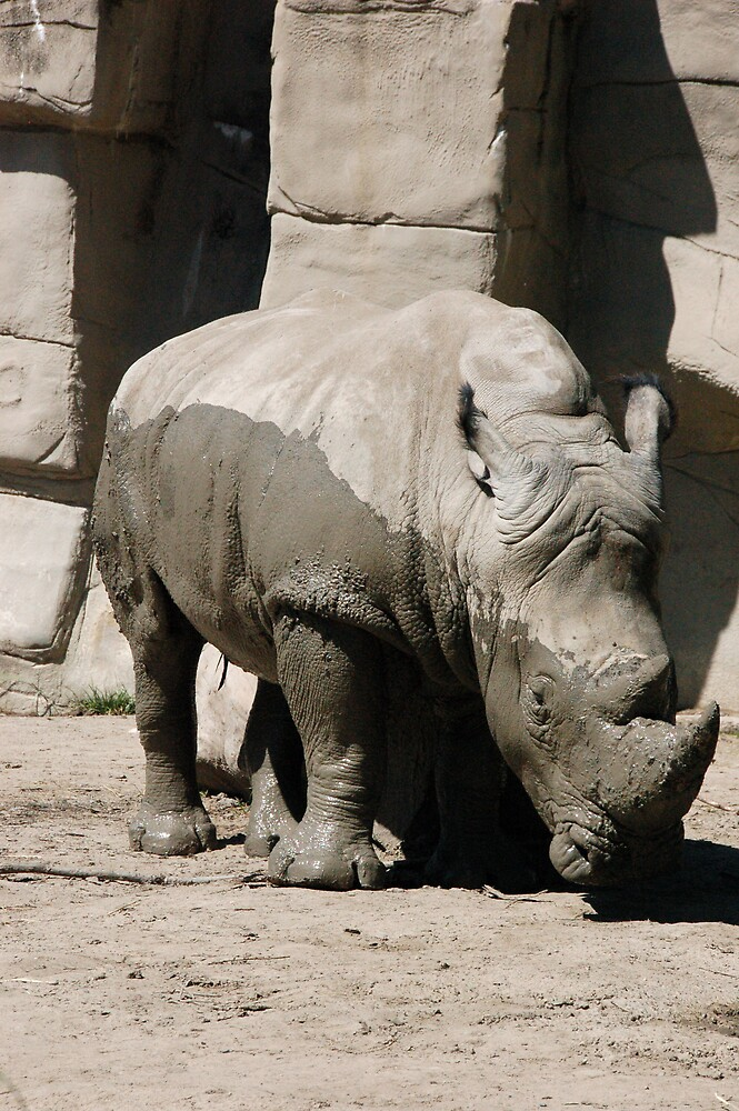 Rhino at the Detroit Zoo by Eric Dush