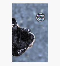 It's A Bubble -Boxer Dogs Series- Photographic Print