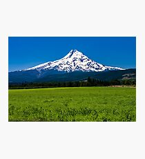 Mt Hood With Pasture  Photographic Print