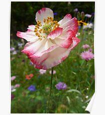 Wildflowers and Rain  Poster