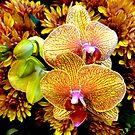 Autumn's Rejoicing by Elaine Bawden