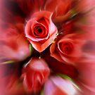 Rose Dream by Elaine Bawden